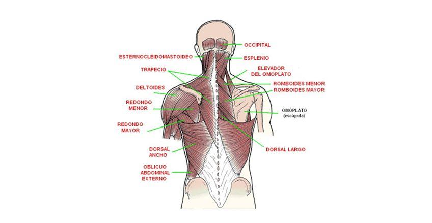 Osteomas dorsalgia
